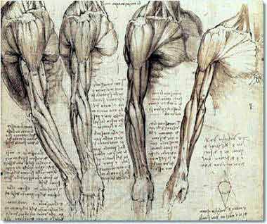 Da Vinci would have been killed for Gross Anatomy if people knew, be happy you can do it as a requirement.