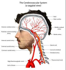 https://neuro4students.wordpress.com/pathophysiology/